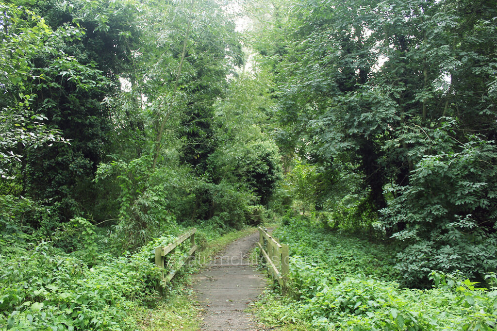 A small wooden bridge surrounded by greenery, including trees and bushes.