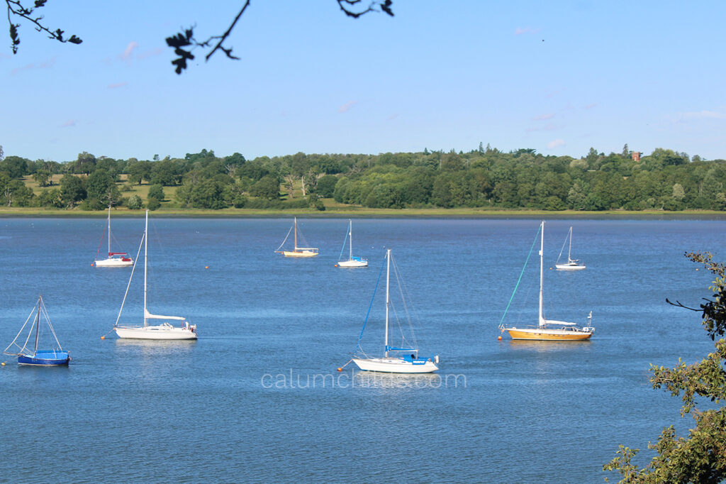 A group of yachts sailing across the blue Orwell River, with a view of green trees and grass in the background.