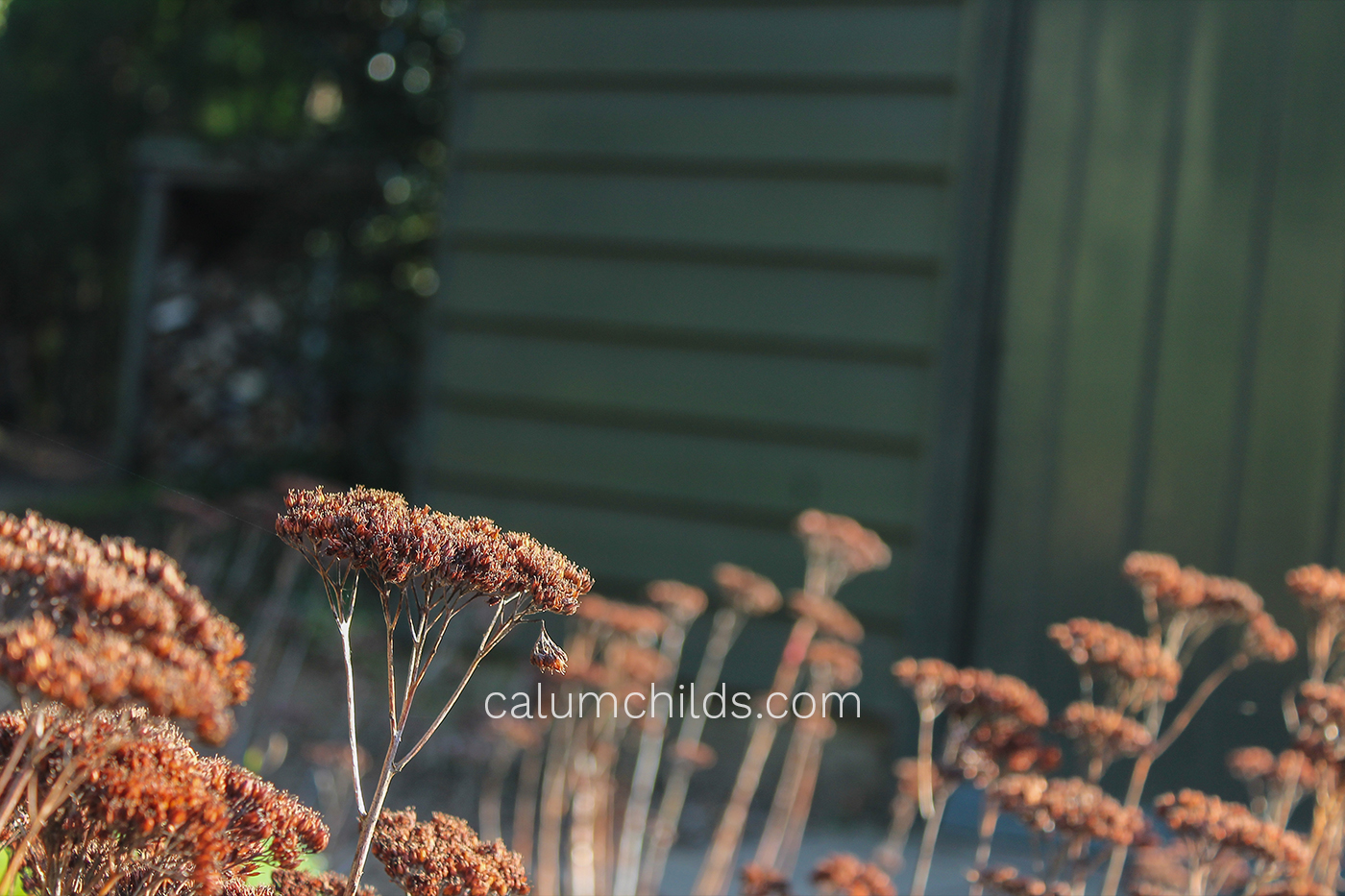 The brown seed heads of summer flowers still say a bold statement - even in the middle of winter!