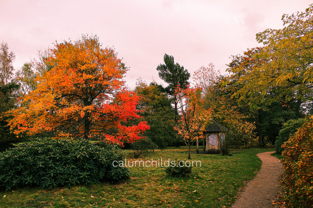 Multiple trees with red, orange and yellow leaves are sporadically spread out throughout the garden.