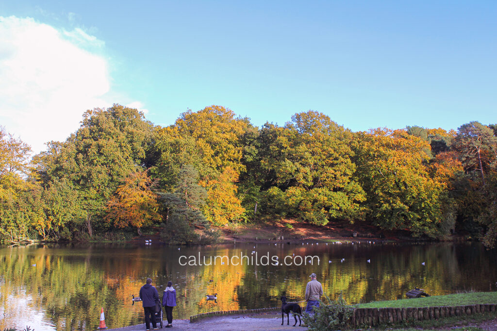 A landscape of beautiful autumn trees in a park with a medium-sized lake.