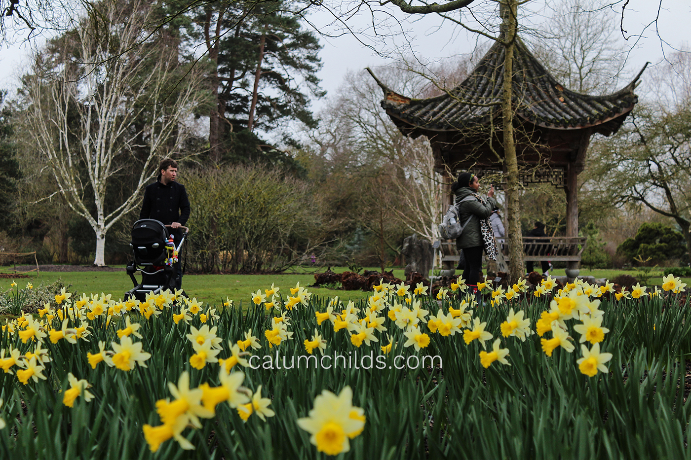 Daffodils grow in the foreground whilst a few people walk in the background.